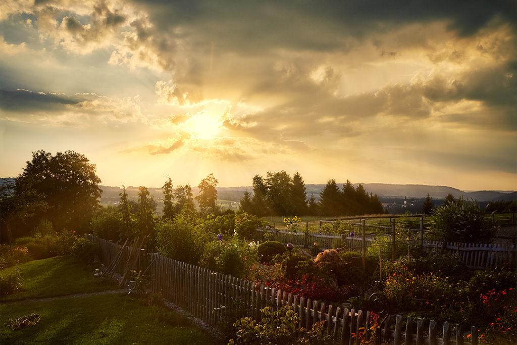 landscape fotografie münchen bauerngarten abendsonne gemüse